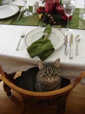 Sumo - always ready to eat
