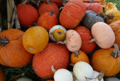 gorgeous gourds