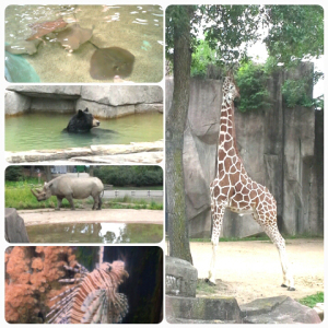 Amazing Animals we saw during a trip to the zoo: Sting Ray touch pool, Bathing bear, Rhino and his reflection in the pond, lion fish, and Giraffe stretching so tall