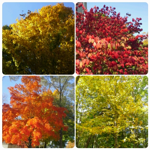 Colors of Fall in Wisconsin