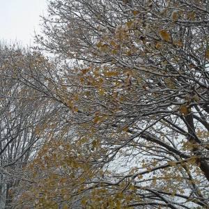 November snow in Wisconsin