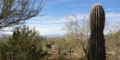 Arizona Sonora Desert Museum view