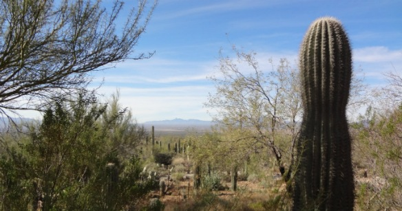 Arizona Sonora Desert Museum view
