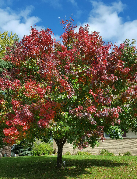 red, green tree in fall