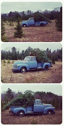 photo-collage-christmas-tree-hunting