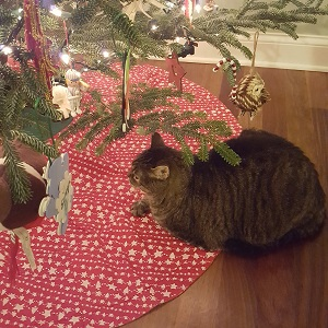 cat-by-christmas-tree