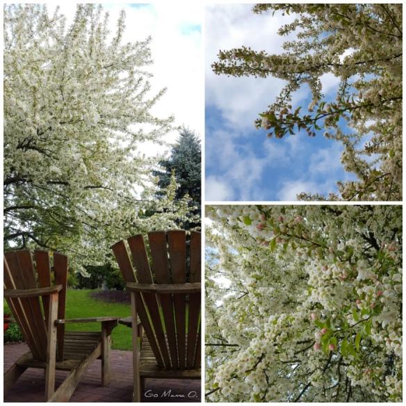 spring blooms Go Mama O