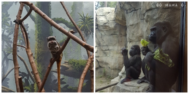 apes and monkey at Como Zoo