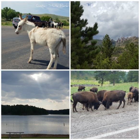 Custer State Park collage.jpg