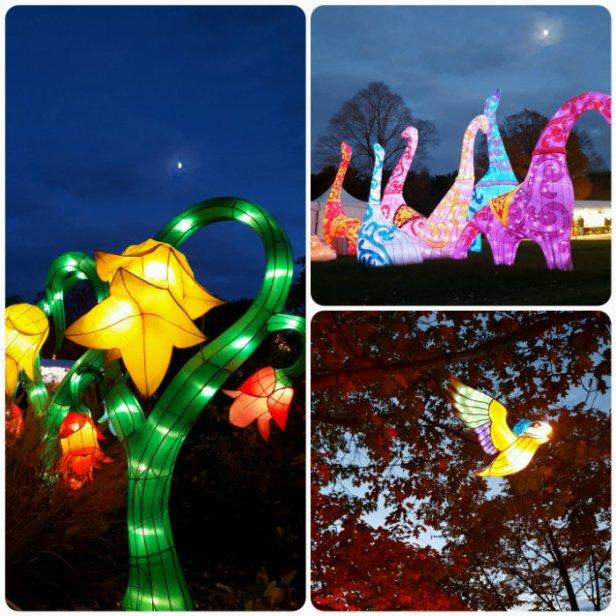 China Lights Dino, Flower collage Go Mama O.