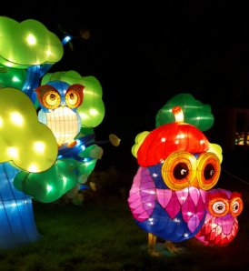China Lights Owl Family 1