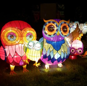 China Lights Owl family 2