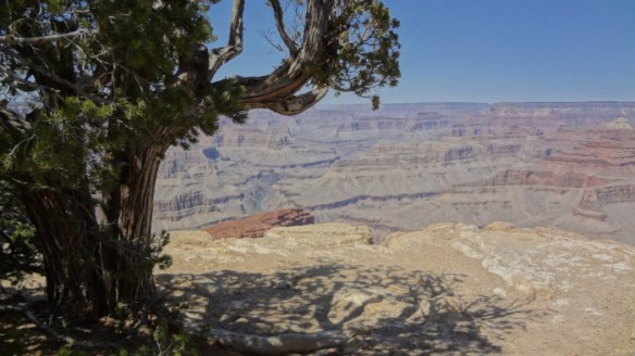 Shadow of the tree Grand Canyon