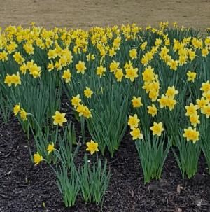 spring flowers in Atlanta