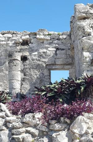 Mayan Ruins and plant life at Tulum