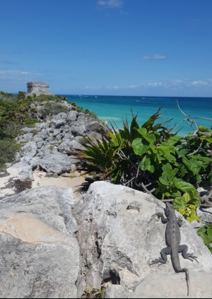 Tulum view of the ocean
